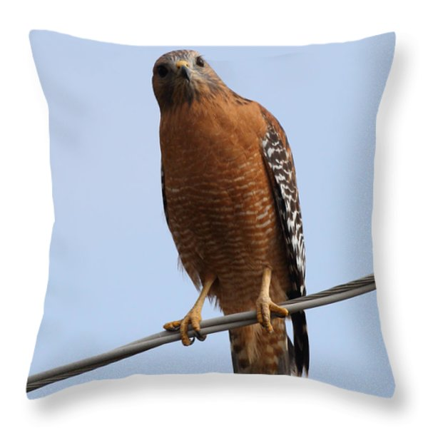 Red-shouldered Hawk . 7d10254 Throw Pillow by Wingsdomain Art and Photography