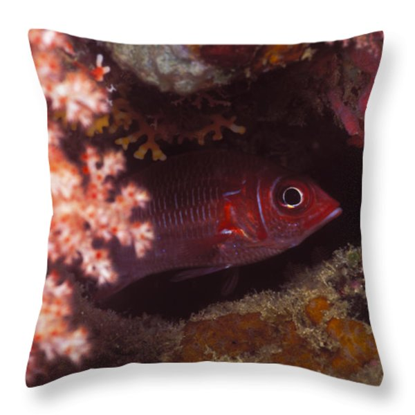 Red Squirrelfish Hiding Under Reef Throw Pillow by James Forte