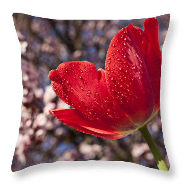Red Tulip Against Cherry Tree Throw Pillow by Garry Gay