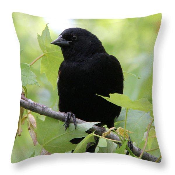 Red-winged Blackbird Throw Pillow by Doris Potter