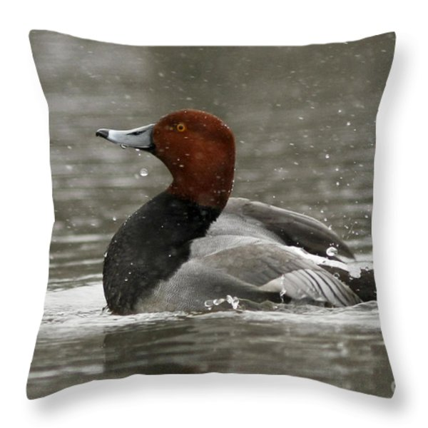Redhead Duck Flapping Its Wings Throw Pillow by Inspired Nature Photography By Shelley Myke