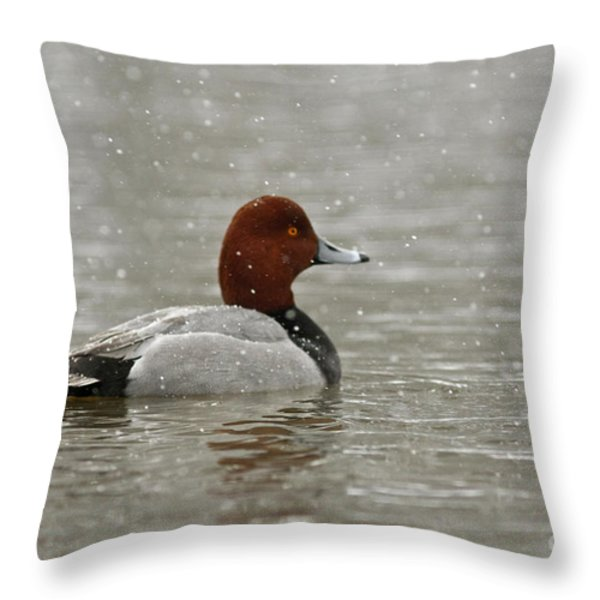 Redhead Duck in winter Snow Storm Throw Pillow by Inspired Nature Photography By Shelley Myke