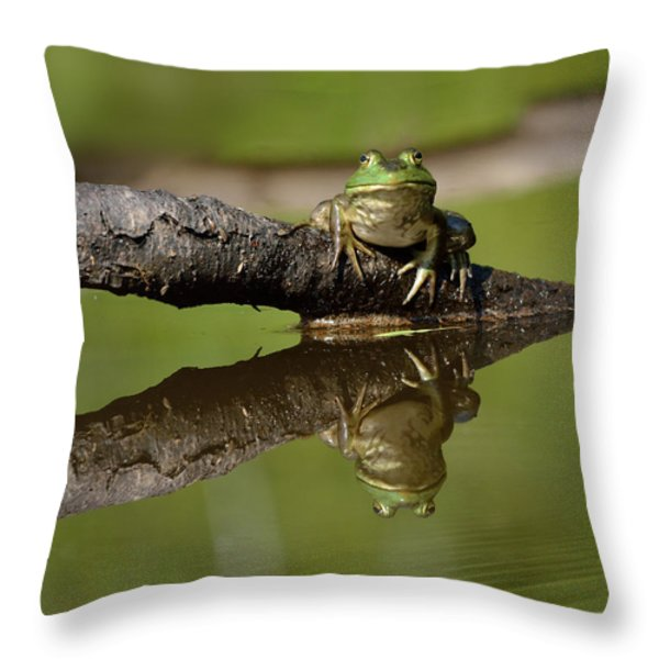 Reflecktafrog Throw Pillow by Susan Capuano