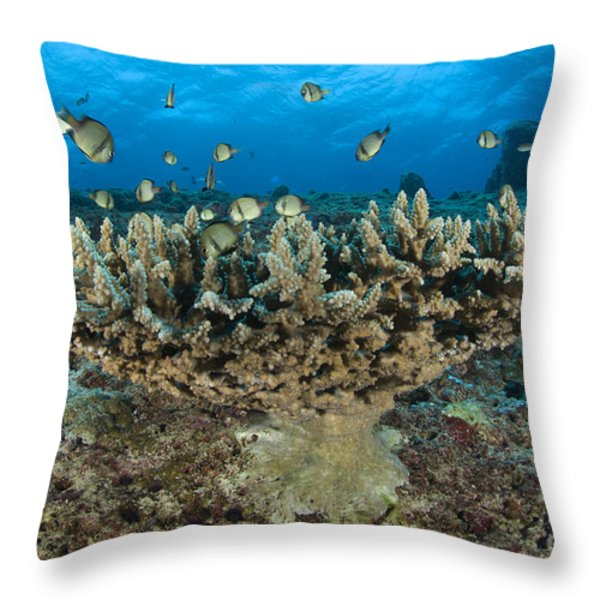 Reticulate Humbugs Gather Under Stone Throw Pillow by Steve Jones