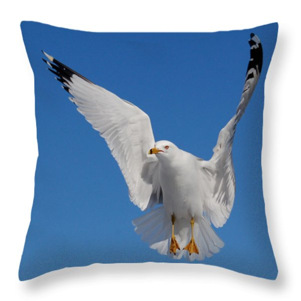 Ring billed gull in flight Throw Pillow by Mircea Costina Photography