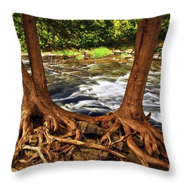 River And Trees Throw Pillow by Elena Elisseeva