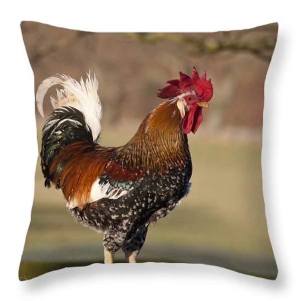 Rooster Gallus Gallus Northumberland Throw Pillow by John Short
