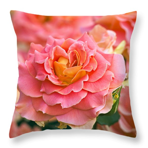 Rosa 'Brass Band' Throw Pillow by Alan Detrick and Photo Researchers