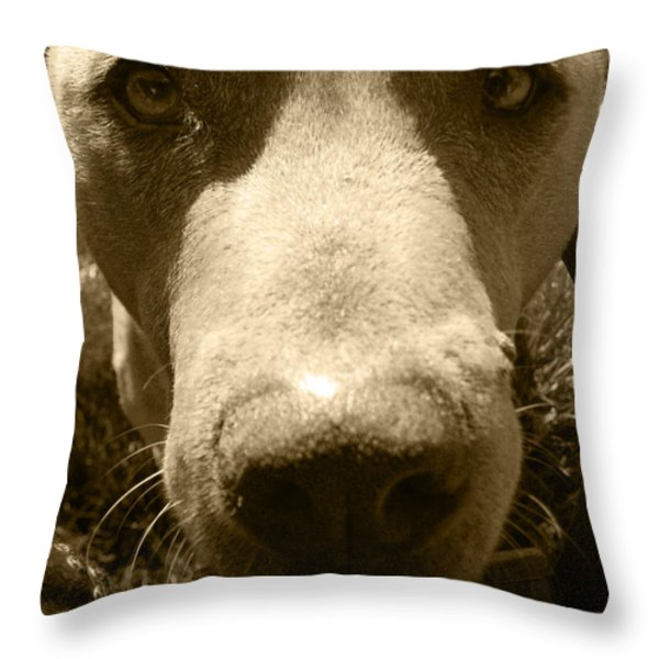 Roscoe Pitbull Eyes Throw Pillow by Kym Backland