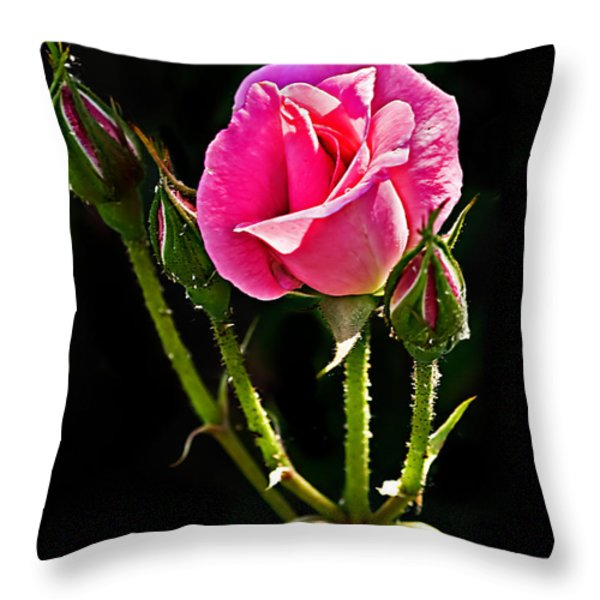 Rose And Buds Throw Pillow by Robert Bales