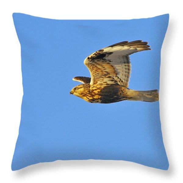 Rough-legged Hawk Throw Pillow by Tony Beck