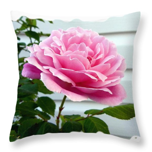 Royal Kate Rose Throw Pillow by Will Borden