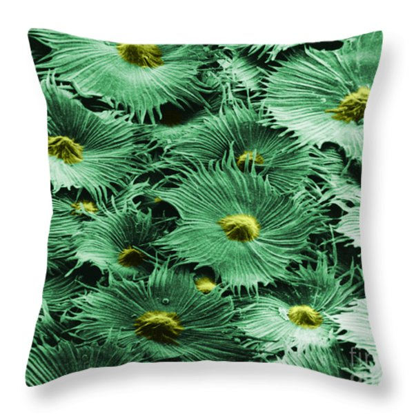 Russian Silverberry Leaf  Throw Pillow by Asa Thoresen and Photo Researchers