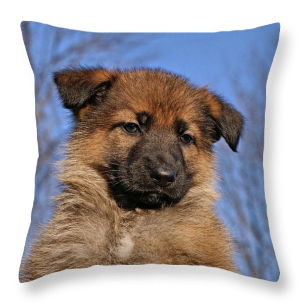 Sable German Shepherd Puppy II Throw Pillow by Sandy Keeton