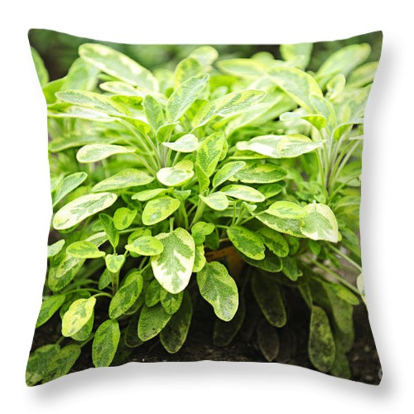 Sage plant Throw Pillow by Elena Elisseeva