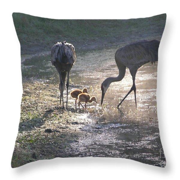 Sandhill Crane Family in Morning Sunshine Throw Pillow by Carol Groenen