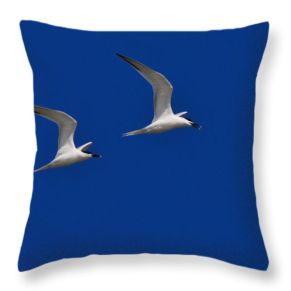 Sandwich Terns Throw Pillow by Tony Beck