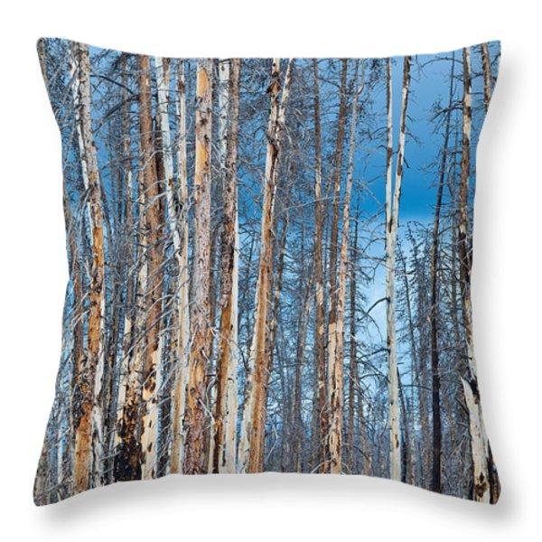Scarred Pines Yellowstone Throw Pillow by Steve Gadomski
