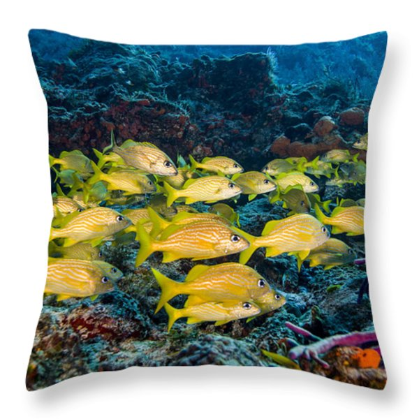 Schooling French Grunts Throw Pillow by Mike Raabe