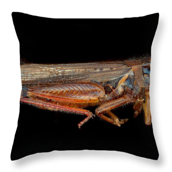 Science - Entomology - The specimin Throw Pillow by Mike Savad