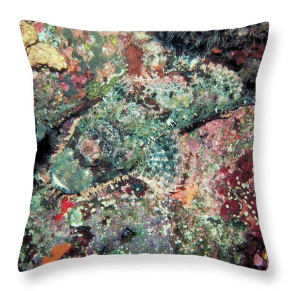 Scorpionfish Throw Pillow by Gregory G. Dimijian