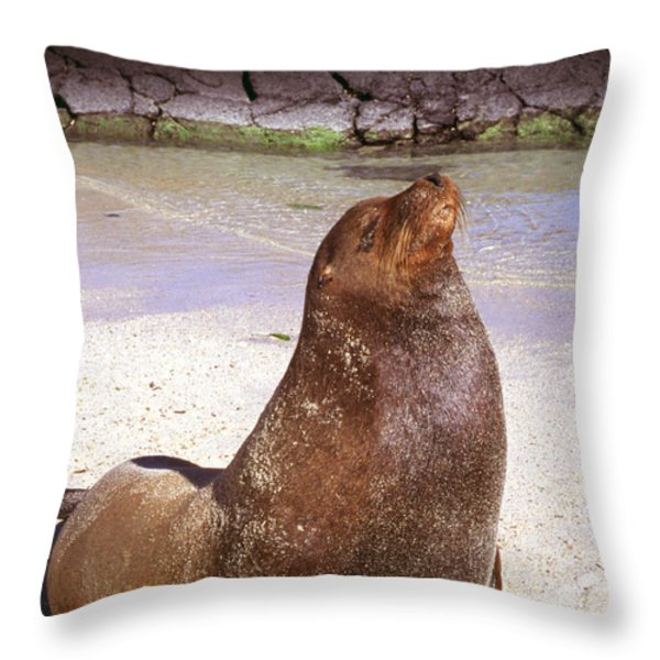 Sea Lion  On Genovesa Island Throw Pillow by Thomas R Fletcher