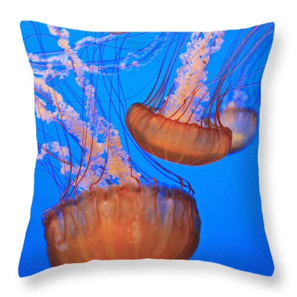 Sea Nettles Chrysaora Fuscescens In Throw Pillow by Stuart Westmorland