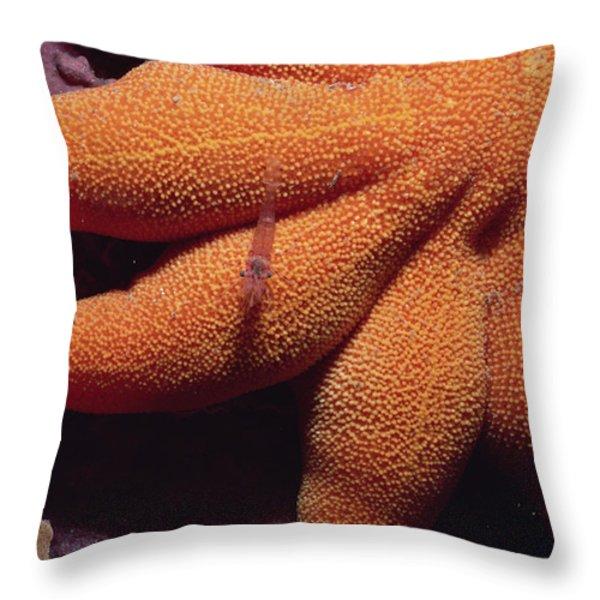 Sea Star With Red Shrimp Baffin Island Throw Pillow by Flip Nicklin