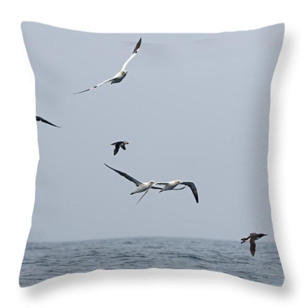 Seabirds in Flight Throw Pillow by Louise Heusinkveld