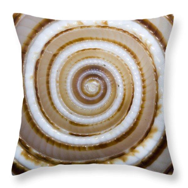 Seashell Spirals Throw Pillow by Bill Brennan - Printscapes