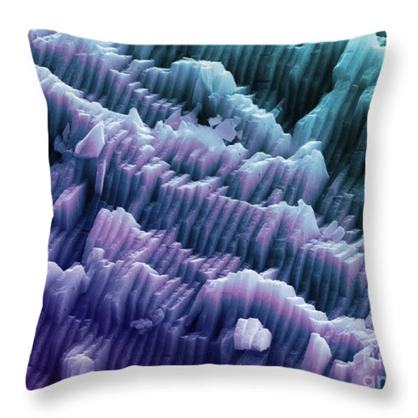 Sem Of A Blue Mussel Shell Throw Pillow by Ted Kinsman