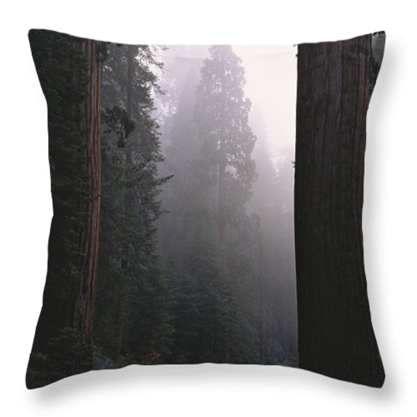 Sequoia Trees Dwarf A Car Traveling Throw Pillow by Carsten Peter