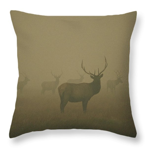 Several Bull Elk Stand In Smoke Throw Pillow by Michael S. Quinton
