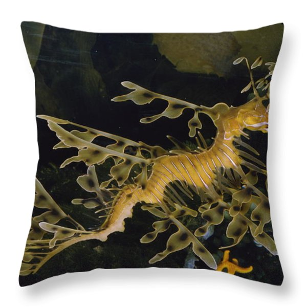 Several Views Of The Leafy Sea Dragon Throw Pillow by Paul Zahl