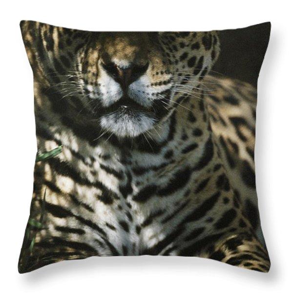 Shadows Flicker Over A Jaguar Panthera Throw Pillow by Hope Ryden
