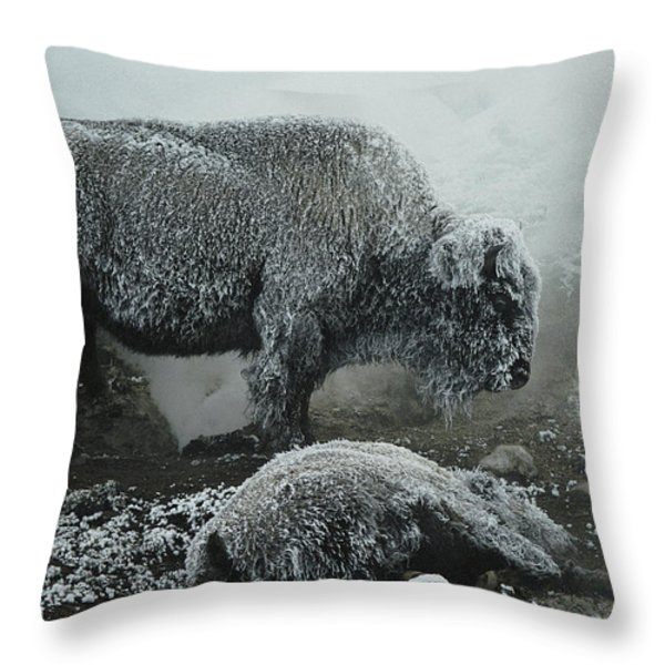 Shaggy With Rime, An American Bison Throw Pillow by Michael S. Quinton