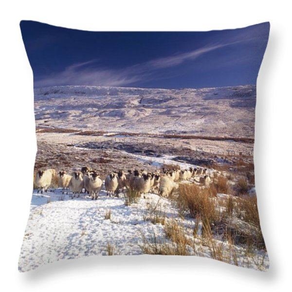 Sheep In Snow, Glenshane, Co Derry Throw Pillow by The Irish Image Collection