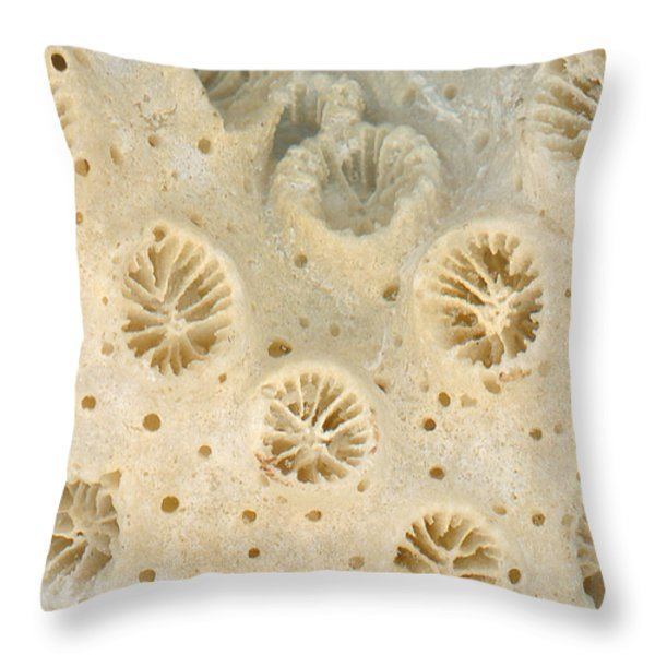 Shell - Conchology - Coral Throw Pillow by Mike Savad