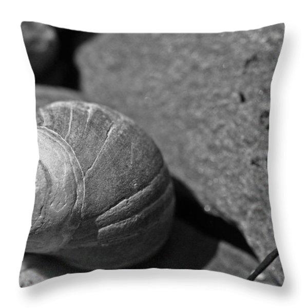 Shells II Throw Pillow by David Rucker