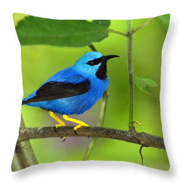 Shining Honeycreeper Throw Pillow by Tony Beck
