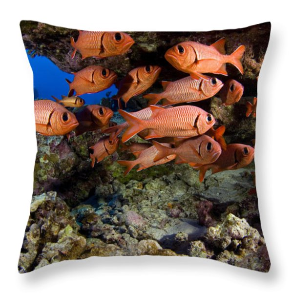Shoulderbar Soldierfish Throw Pillow by Dave Fleetham - Printscapes