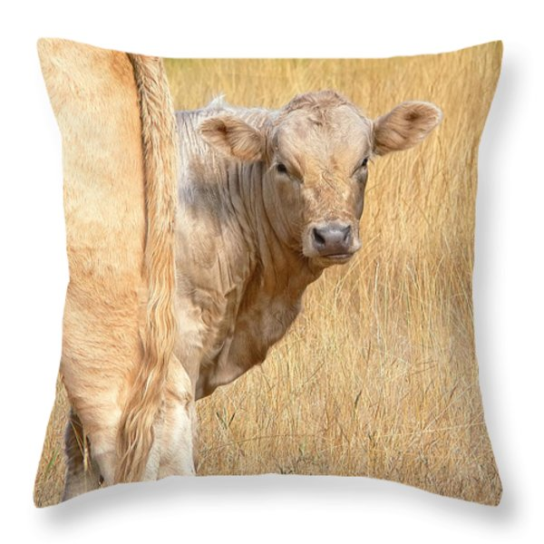 Shy White Calf Throw Pillow by Jennie Marie Schell