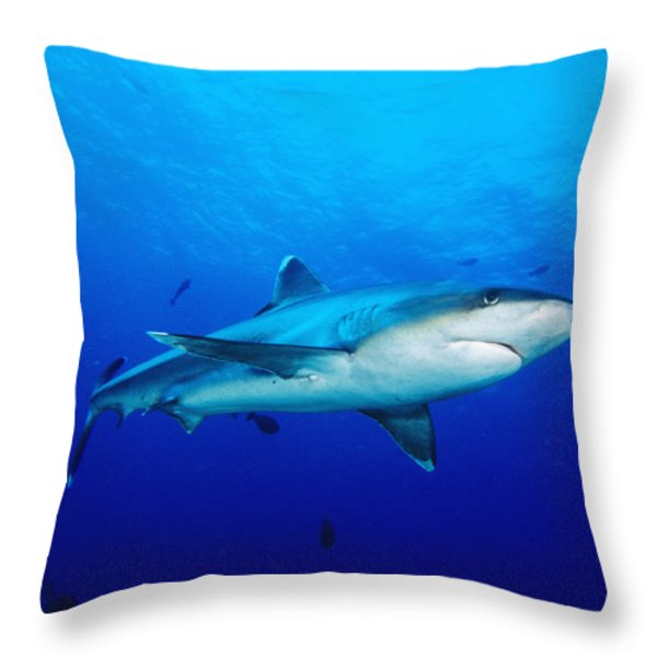 Silvertip Shark In Thailand Throw Pillow by Dave Fleetham - Printscapes