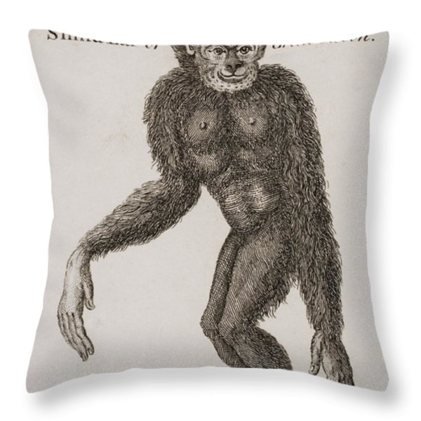Simia Lar, Great Gibbon. Engraved By Throw Pillow by Ken Welsh