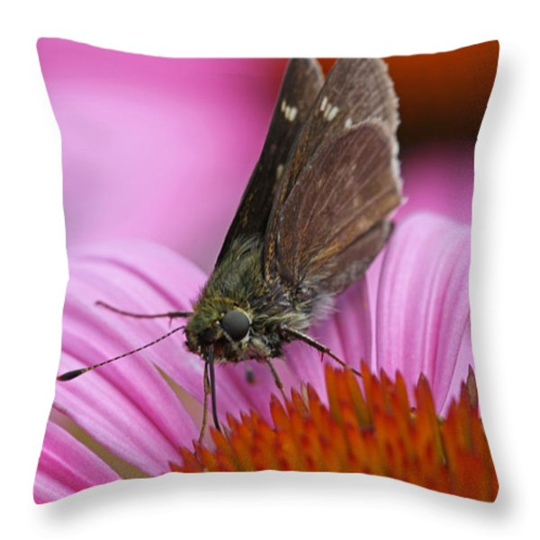 Skipper Moth Macro Photography Throw Pillow by Juergen Roth