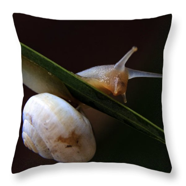 Snail Throw Pillow by Stylianos Kleanthous