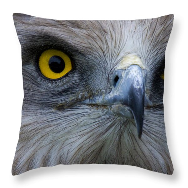 Snake Eagle 2 Throw Pillow by Heiko Koehrer-Wagner