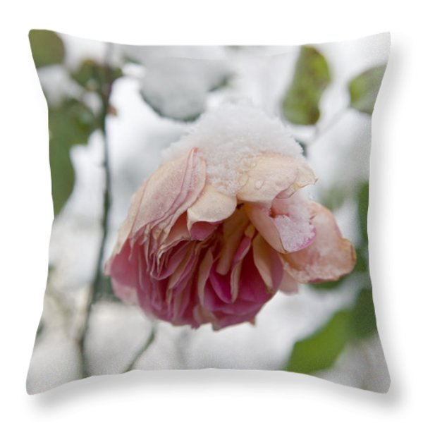 Snow-covered rose flower Throw Pillow by Frank Tschakert