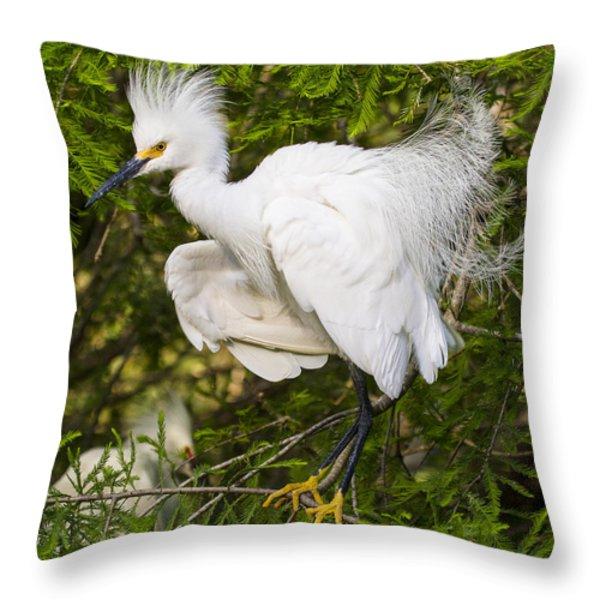 Snowy Egret In Breeding Plumage Throw Pillow by Bill Swindaman