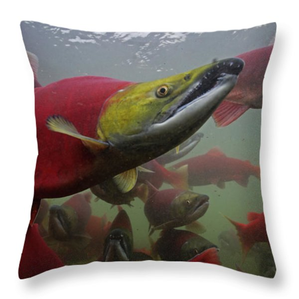 Sockeye Salmon Find Their Way Throw Pillow by Michael Melford